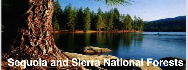 Sequoia and Sierra National Forests